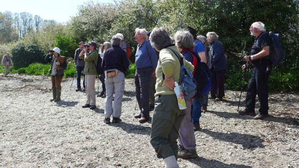 Launceston Area Parish Wildlife Group on the shore of the estuary in April