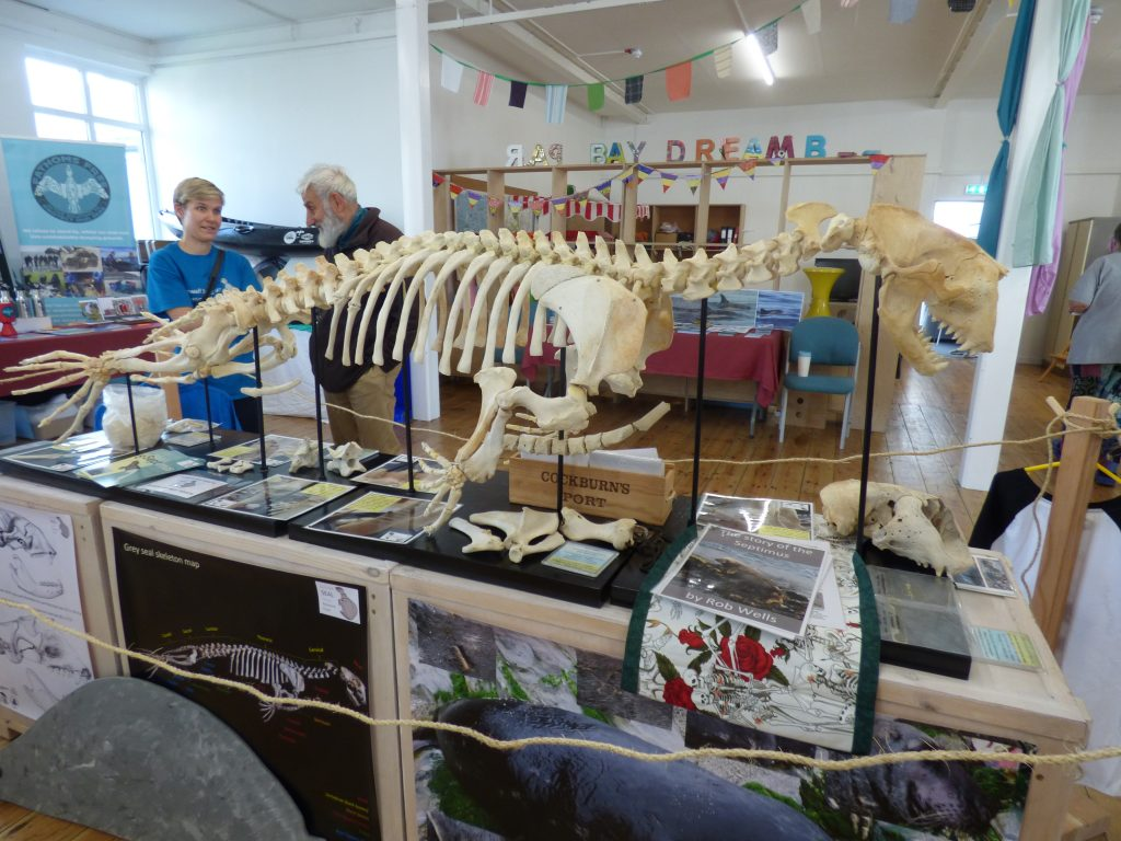 The skeleton of Septimus White on display in Par
