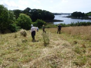 Scything for nature conservation