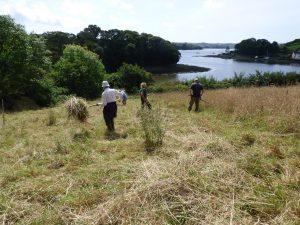 Scything for nature conservation