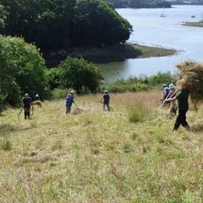 Scything and hay clearing work party at Churchtown Farm Community Nature Reserve, Saltash