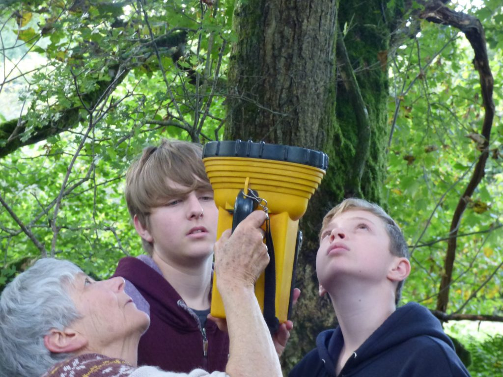 Using a torch to see bats