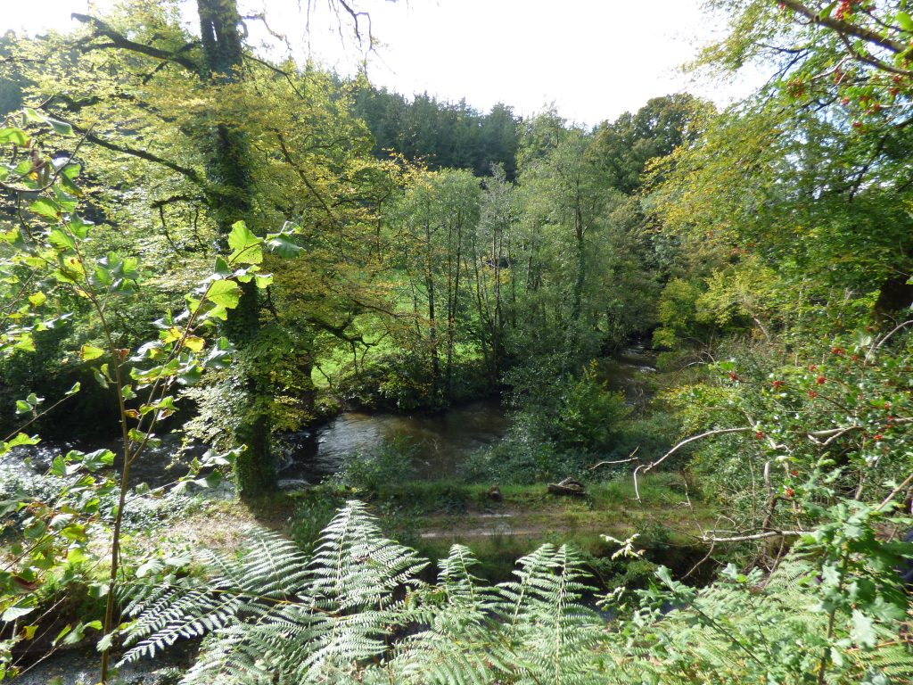Armstrong's Wood view to River Inny
