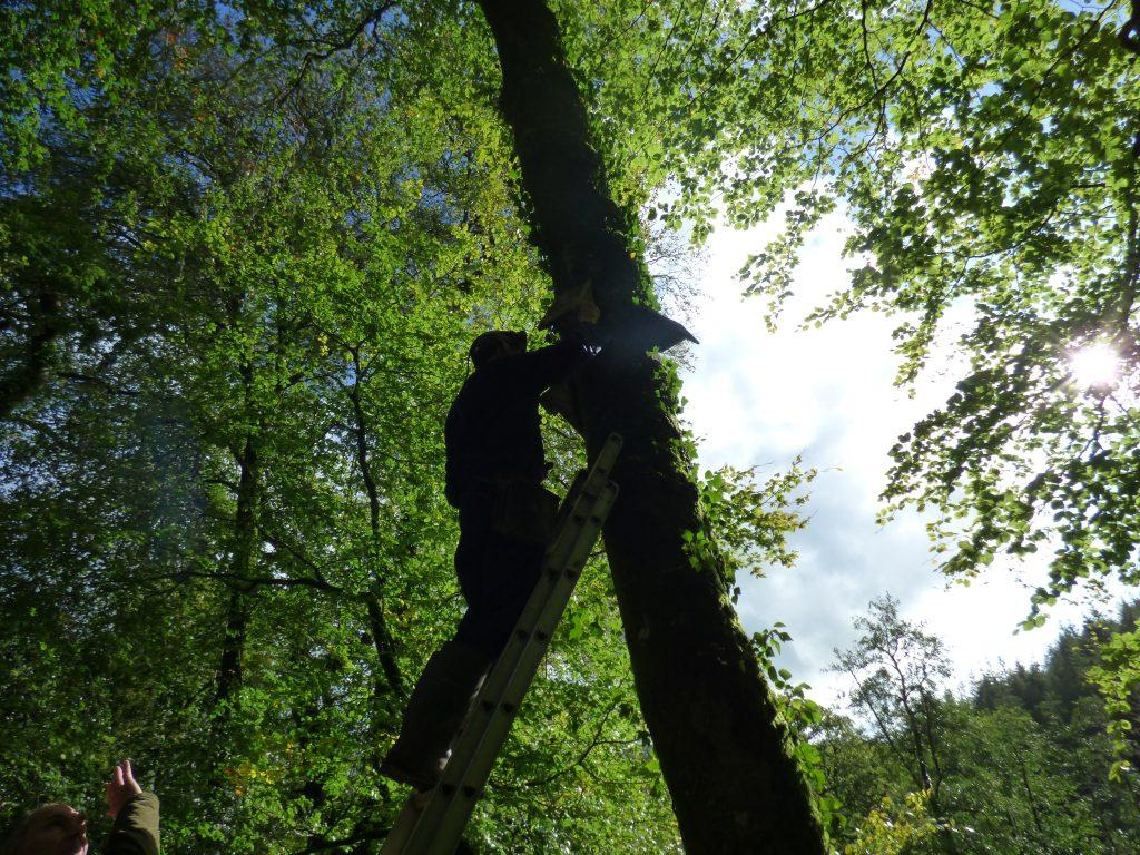 Glorious sunshine & Tony up ladder