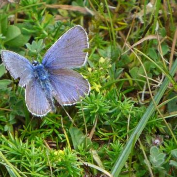 Insect season – how to find out about insects