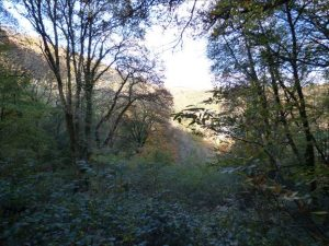 Kilminorth Woods, Looe –guided walk + coppicing for dormice