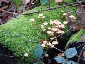 Fungi and moss on a log.