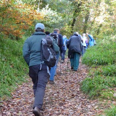 Wildlife Group walk through Kilminorth Woods, Nov 2019