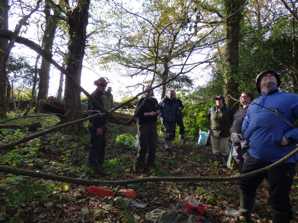 Planning the coppicing