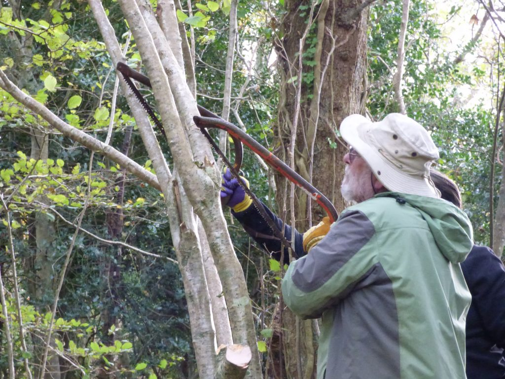 Removing higher parts of tree first with bowsaws