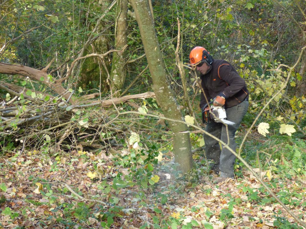Chainsawing - tree begins to fall