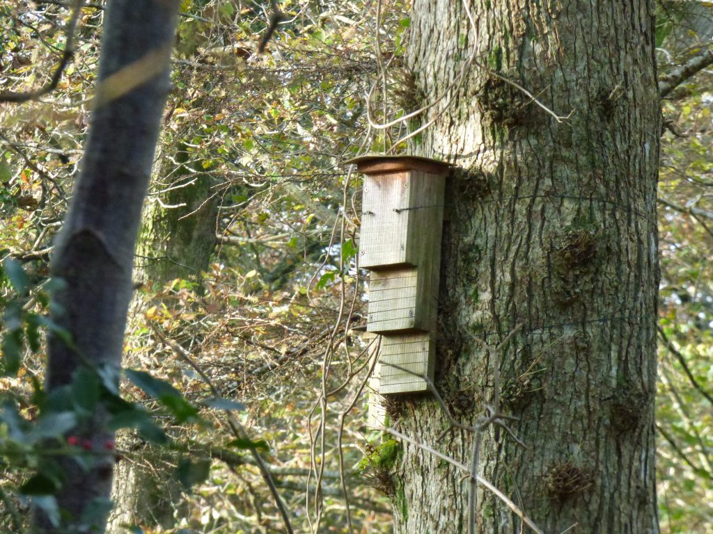 Bat box, Kilminorth Woods