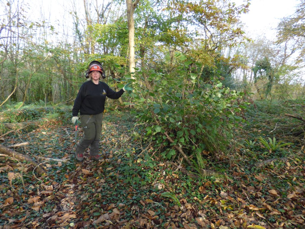 Coppice regrowth
