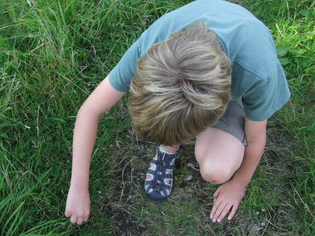 Child looking for minibeasts