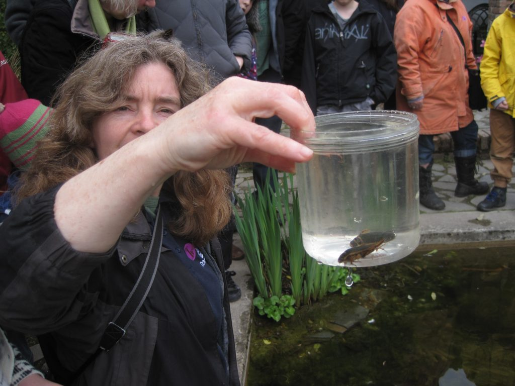 The author with two Great Diving Beetles found in a pond near the south coast of Cornwall © Andy Millar