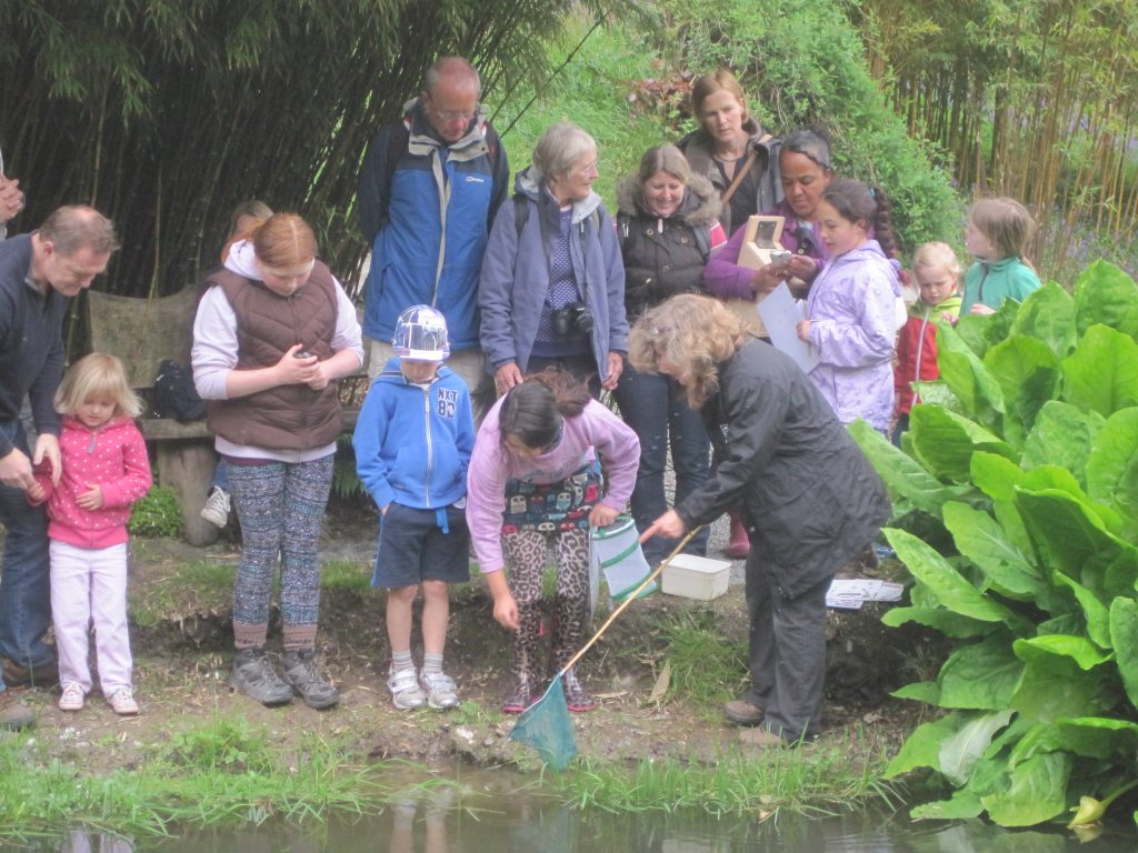 The author leads a pond-dipping activity at Trebah during Cornwall Wildlife Trust's Discovery Day, 2015 © Andy Millar