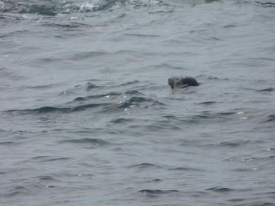 Another seal
