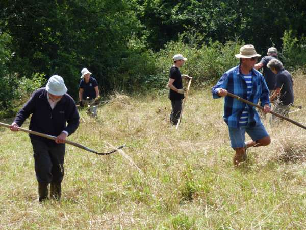 Scything in action in the sunshine