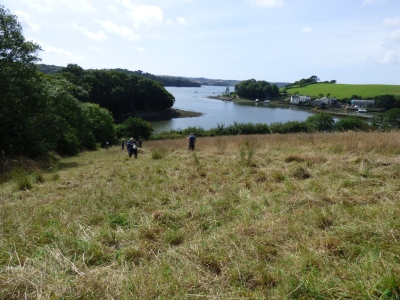 We came across a hayfield above the estuary
