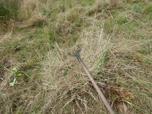 Raking the dry cut grass