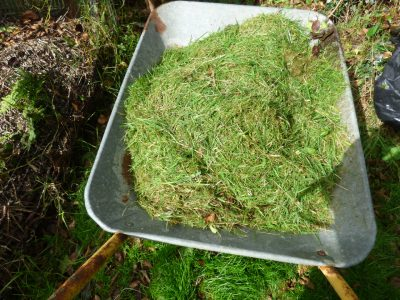 Grass in wheelbarrow