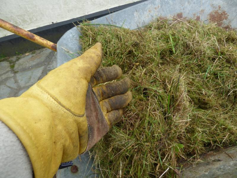 Cut grass in wheelbarrow