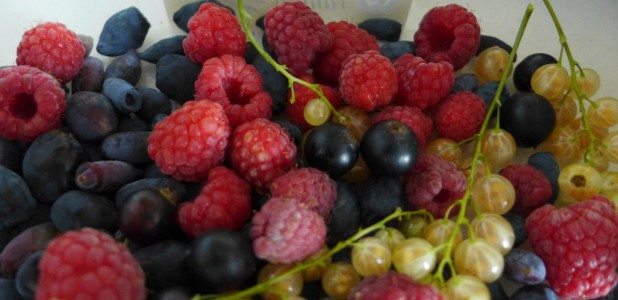 Mixed berries from the garden