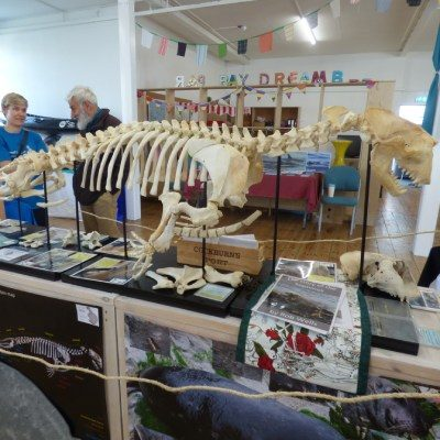 Septimus the Seal's skeleton at the Friends of Par Beach event