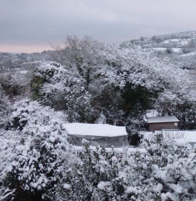 Garden with fruit cage and snow