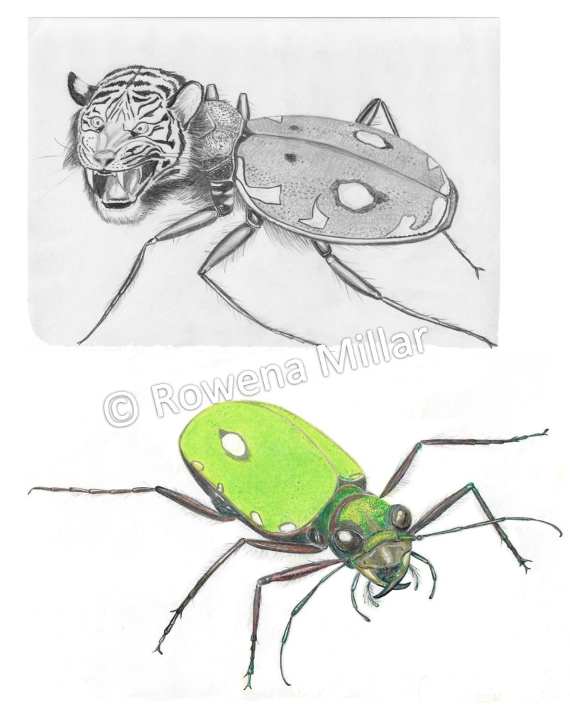 Mythical vs real tiger beetle