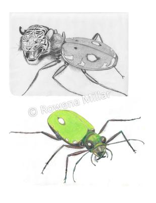 Tiger beetle – imaginary vs real