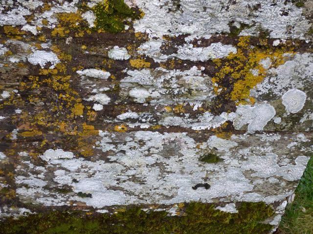 Lichens on church wall