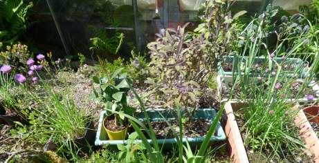 A sunny place for herbs beside the greenhouse