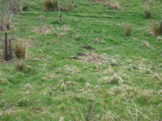 Molehills, St Clether