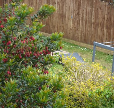 Hedge and fence