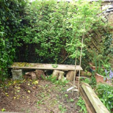 How to make your fence a benefit – not a barrier – to wildlife