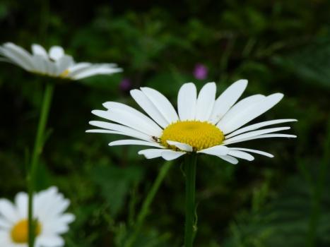 Daisy landing pad