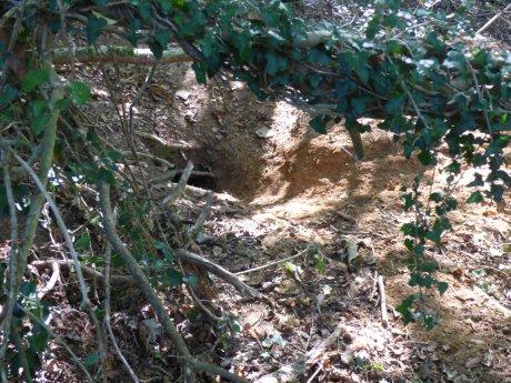 Badger sett entrance