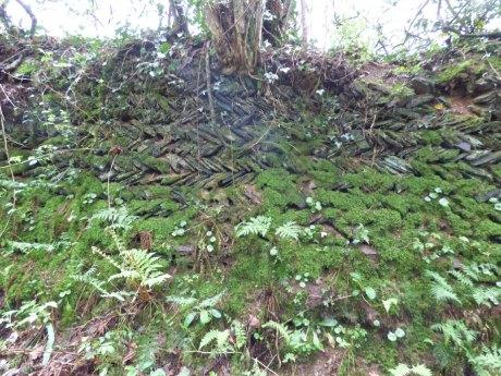 Old herringbone-style hedge